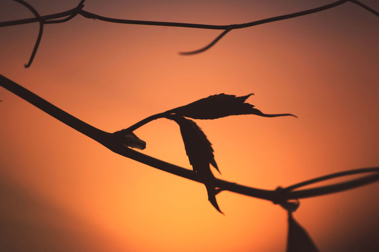 Sunset Sunset_collection Reptile Tree Sunset Silhouette Living Organism Colored Background Archival Orange Color Orange Background