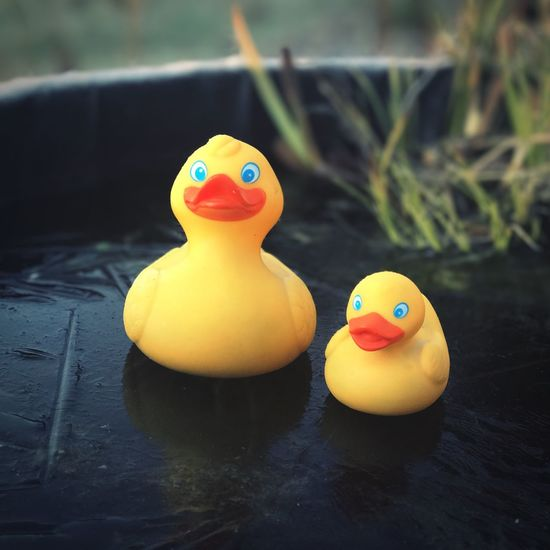 Rubber Duck Toy Water Yellow Floating On Water Focus On Foreground Swimming Pool Close-up Bathtub No People Outdoors Day