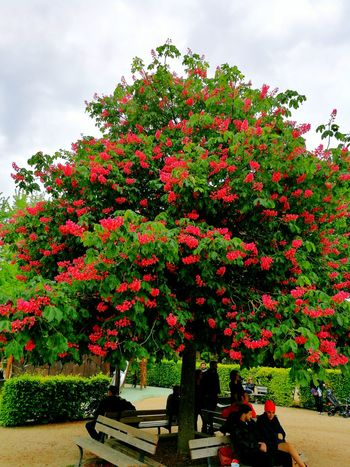 Growth Cloud - Sky Outdoors Plant Day Nature Flower Tree Red Beauty In Nature Sky Tranquility Fragility Nancy