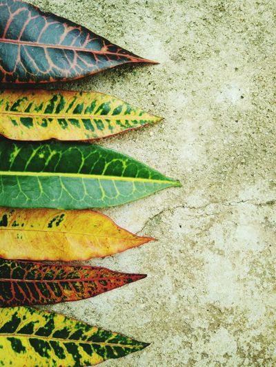 High angle view of leaves on cement floor