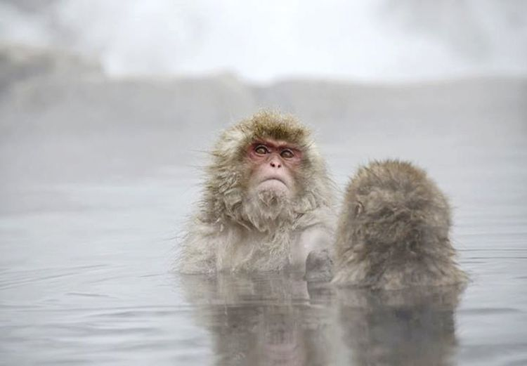Portrait of young monkeys looking away on snow covered landscape