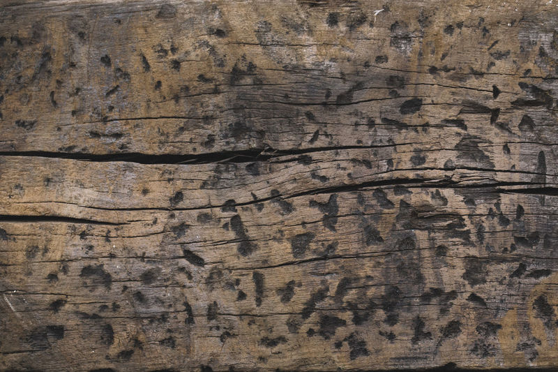 Surfaces And Textures Textures and Surfaces Wood Wood Grain WoodLand Backgrounds Brown Close-up Full Frame Old Pattern Plank Rough Structure Structure And Nature Structures Surface Surface Texture Texture Textured  Tree Weathered Wood Wood - Material Wood Grain