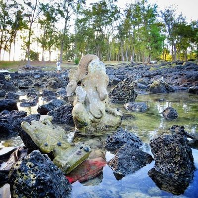 #Ganesh dans l'eau #ilemaurice #mauritius Ganesh Mauritius Igworldclub Ic_wow Worldingram Ilovethisplace Ilemaurice Igersmauritius World_specialist Globe_travel Cs_reality