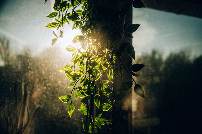 Close-up of plants against window