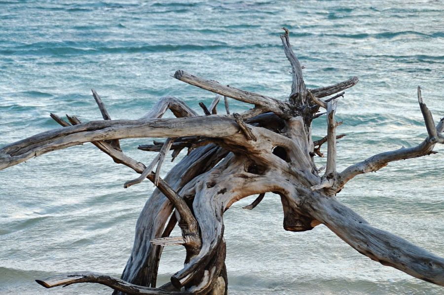 Stranded Enhanced Wood Wood - Material Tree Stranded Seaside Beach Waves Waves, Ocean, Nature Waves And Rocks Waves Rolling In Waves Splashing Trees Tree Trunk TreePorn Tree_collection  Water Indian Ocean Paradise Paradise On Earth Traveling Tranquility Seascape Blue Seaside Exploring
