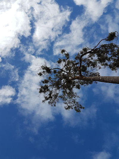 Tree A Tree Tree Sky Cloud - Sky Sky Day No People Animals In The Wild Animal Wildlife Low Angle View