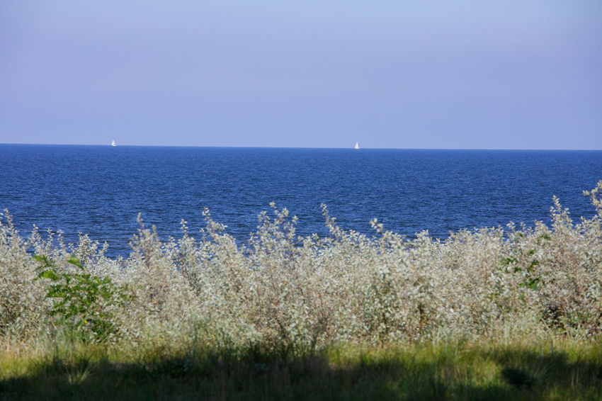 Baltic Sea Baltic Sea Mecklenburg-Vorpommern Nature Sailing Ship White Sail Blue Water Blue Water Blue Sky Clear Sky Coast Horizon Over Water Landsape Landscape Nature No People Outdoors Sea Sea And Sky Summer Tranquil Scene Travel Destinations Usedom