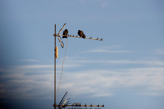 Animal Animal Themes Animal Wildlife Animals In The Wild Antenna - Aerial Bird Cloud - Sky Communication Day Group Of Animals Low Angle View Nature No People Outdoors Perching Sky Technology Two Animals Vertebrate
