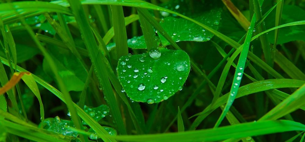 After a rain shower ... Beauty In Nature Close-up Drop Freshness Grass Green Color Growth Leaf Nature No People Outdoors RainDrop Water Wet