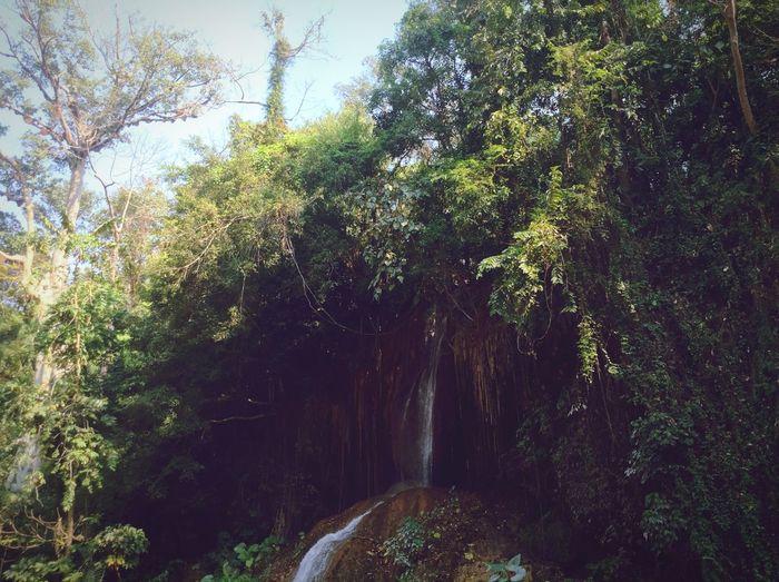 Relaxing Enjoying Life Check This Out Tree Natural Walking Around Waterfall