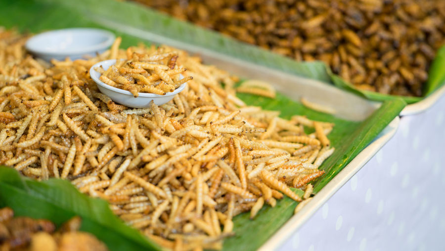 Insects, worms to eat Food And Drink Alternative Foods Close-up Day Food Food And Drink Freshness Healthy Eating Indoors  Insect Insects  No People Plate Ready-to-eat Selective Focus