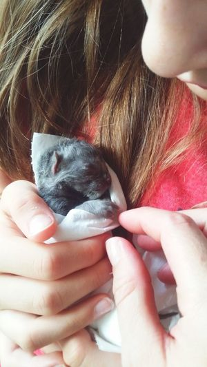 Brand New Veterinary Pet Care Child Gentle Newborn Kitten Life Is Precious Pets Human Hand Women Close-up Kitten Domestic Cat Cat Feline Sleepy At Home This Is Natural Beauty A New Perspective On Life