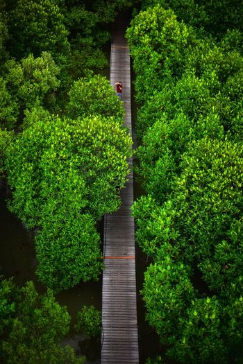 Aerial view of footbridge over lake in forest