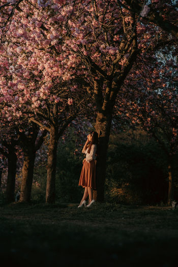 Low angle view of woman standing on cherry tree