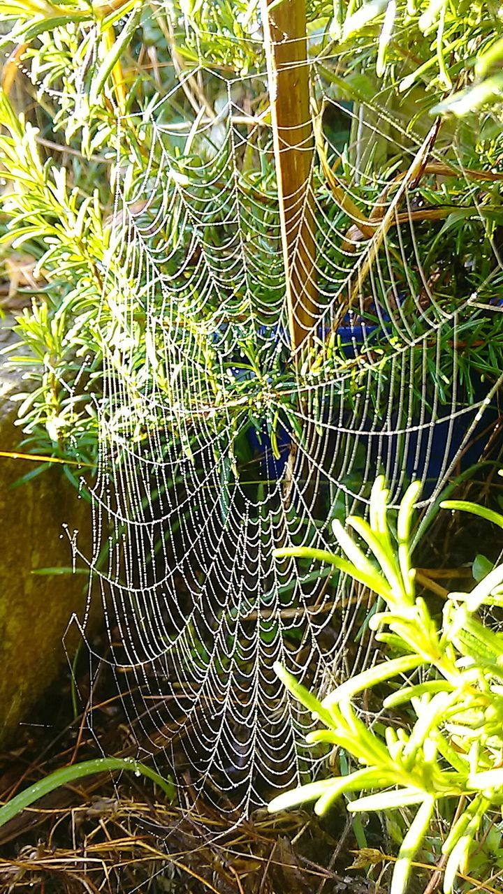 spider web, nature, no people, close-up, day, outdoors, complexity, web, focus on foreground, growth, green color, fragility, intricacy, beauty in nature, plant, freshness, animal themes