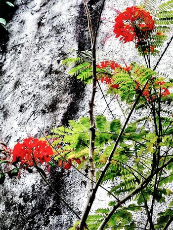 Red Red Flower Nature Outdoor Photography Leaves🌿