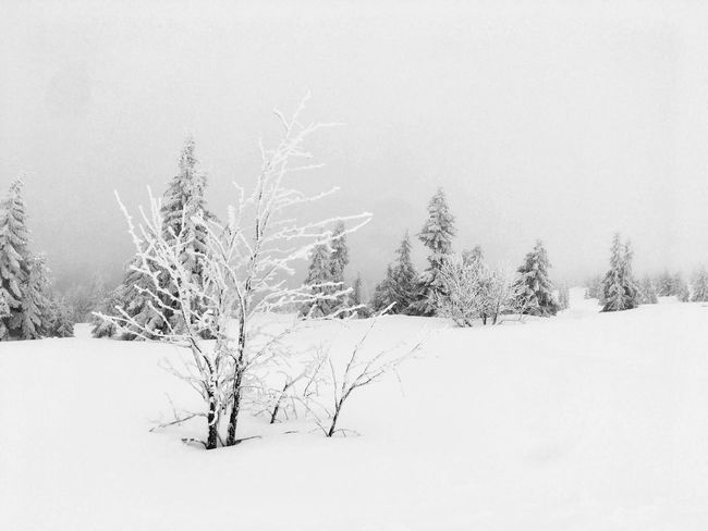 Winter EyeEm Selects Cold Temperature Snow Winter Nature Landscape Tranquil Scene Beauty In Nature Weather Tree Tranquility Bare Tree White Color Cold Frozen Scenics No People