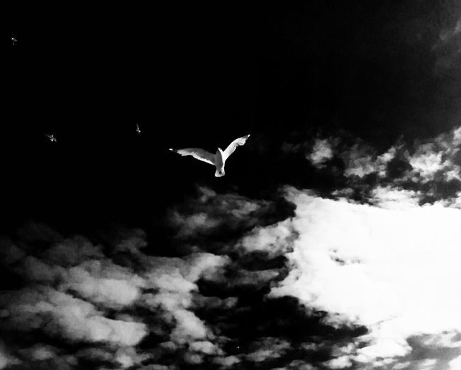 Seegull Black And White Seemöwe Seagull Blackandwhite Photography Clouds And Sky Clouds White Black And White Photography Black Amrum Wattenmeer Wadden Sea Summer Beautiful Day Aestethic Schleswig-Holstein Germany Nordfriesland Freshness Beautiful Nature Pure Beauty Showcase July Fine Art Photography Minimalism