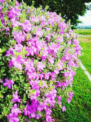 Flowers Narure Taking Photos Hello World
