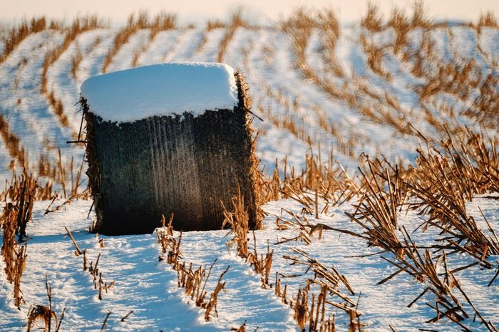 Visual Journal December 2016 Western, Nebraska (Fujifilm Xt1,Nikkor 500mm f8) edited with Google Photos. A Day In The Life Beauty In Nature Camera Work Cold Temperature Eye For Photography EyeEm Best Shots Farmland Field FUJIFILM X-T1 Great Plains Manual Focus MidWest My Neighborhood Nikkor 500mm F8 No People Photo Diary Rural America Rural Scene Scenics Small Town Stories Snow Snow Covered Storytelling Visual Journal Wintertime