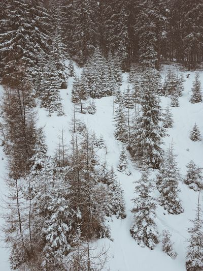 Snowy Forest Snow Landscape_photography Naturelovers Createtoexplore South Tyrol Alps Landscape Nature Beauty In Nature No People Wilderness