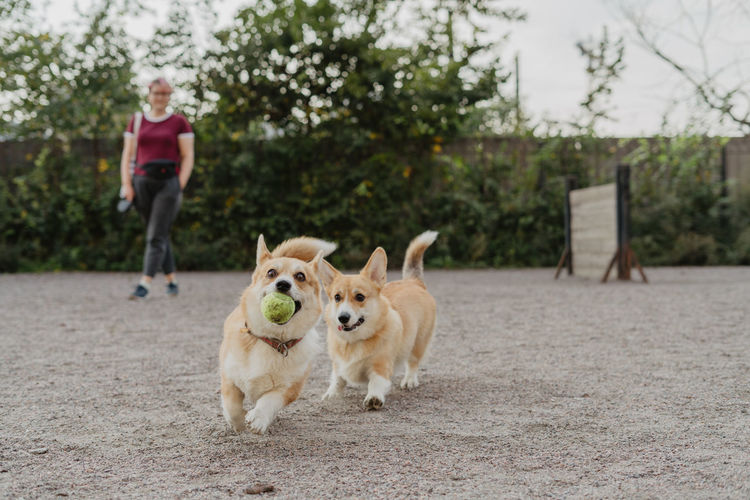 Dog walk, lifestyle One Animal Dog Canine Domestic Pets Domestic Animals Mammal Full Length Portrait Looking At Camera Motion One Person Running Focus On Foreground Tree Day Pet Owner Outdoors