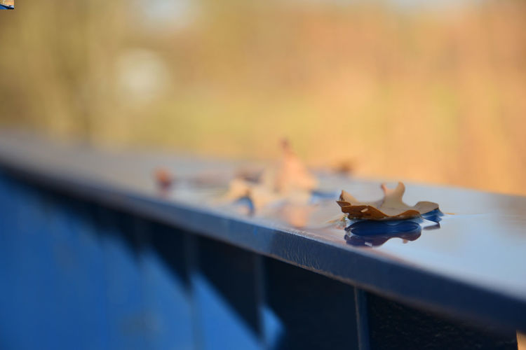 Leaf in water on the handrail in autumn season Handrail  Water Barrier Selective Focus No People Nature Day Close-up Railing Focus On Foreground Leaf Autumn Outdoors Plant Part Sunlight Metal Change Surface Level EyeEmNewHere