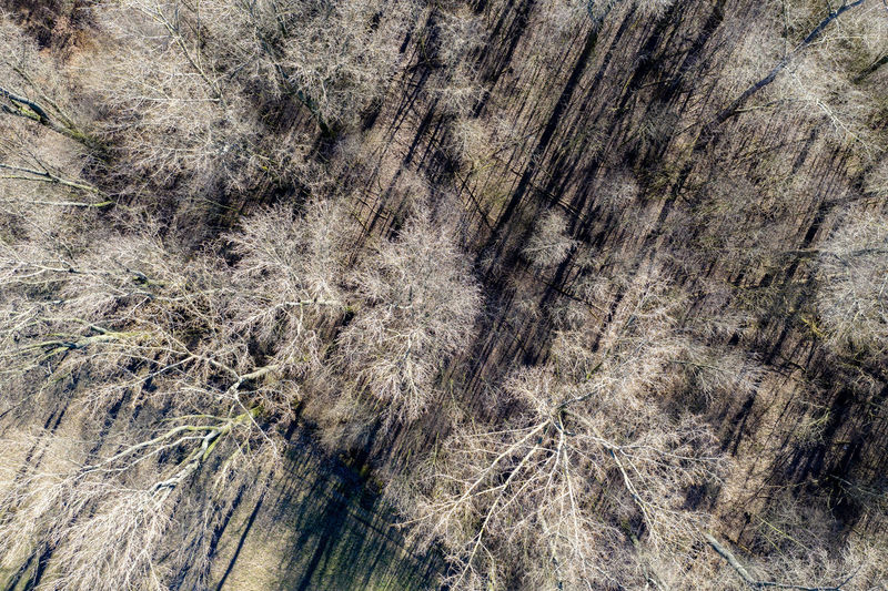 first sunny hours in Rheinaue near Cologne-Worringen No People Nature Day Outdoors Dronephotography Aerial Photography Riverside Trees Land Textured  Forest Tree