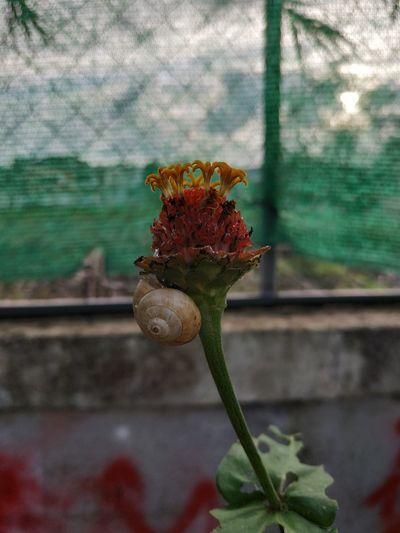 Snail Snail🐌