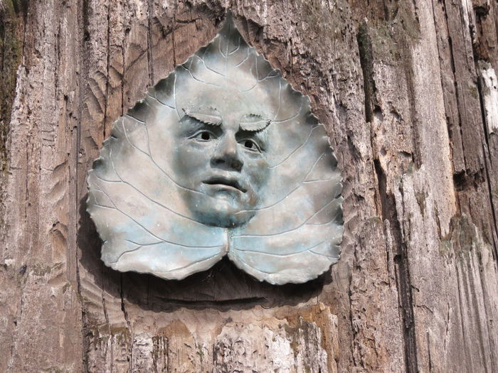 Head in Leaf in Tree Art is Everywhere ArtWork Art Art In A Tree Art In Nature Creativity Face In A Leaf Human Representation Male Likeness Sculpture Tree Tree Trunk Trunk Unexpected Art