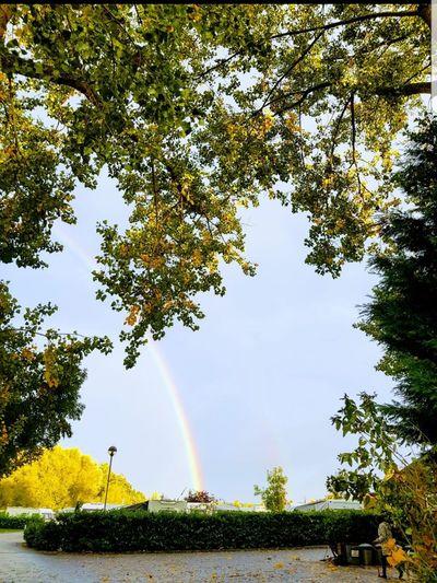 pot of gold Rainbow Escapism Caravan Naturelovers Rainbow Colors Autumn Amazing View Naturephotography Tree Water Spraying Rainbow Irrigation Equipment Motion Sky