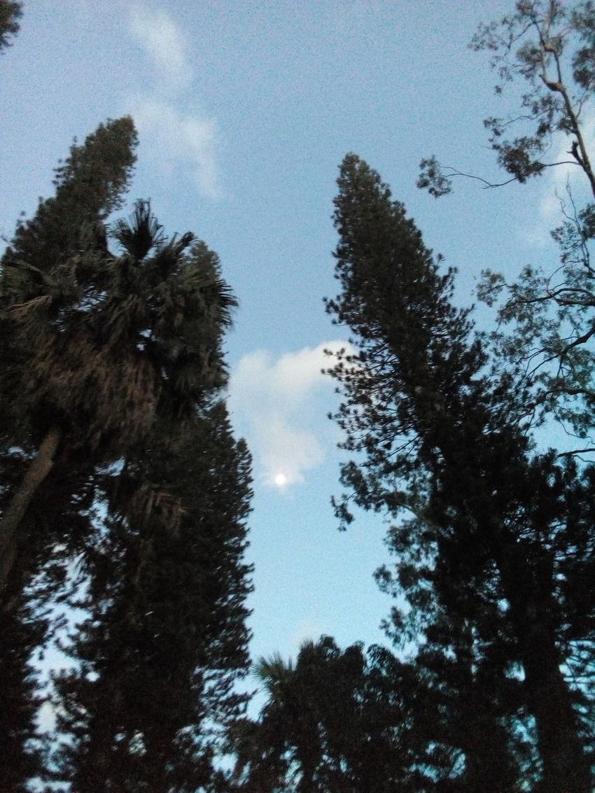 Clouds across the moon Sky