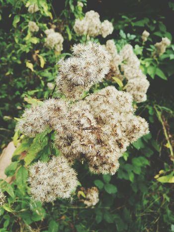 Fleurs Sauvages Roubaix Nature Nord