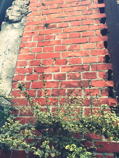 Brick Wall Architecture Day No People Outdoors Built Structure Building Exterior Growth Red Plant Nature Close-up