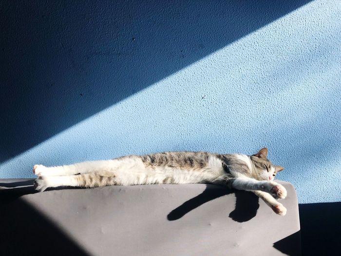 Cat and sun!