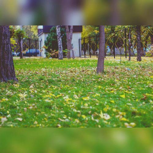 Осень 🍁🍂 листопад Природа Осенний парк пейзаж листья желтые парк г.Тараз