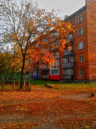 Autumn Orange Color No People Beauty In Nature Close-up Season  Photography Tree Fallen Colorful Tree Urbanscape