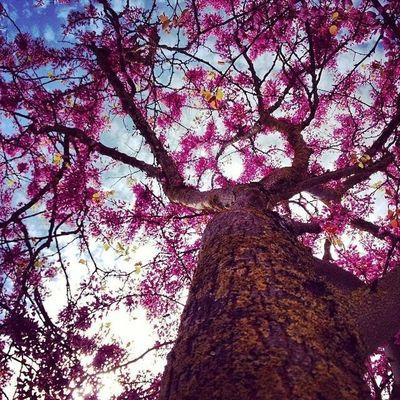 Manchi primavera
