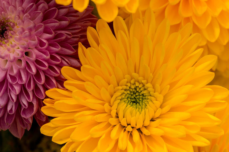 Beautiful Nature Close-up Color Flowers Growth Macro Nature No People Paint The Town Yellow Paint The Town Yellow
