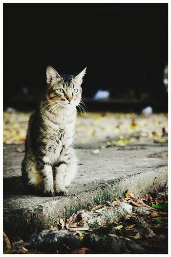 Cat Cat Lovers The Explorer - 2015 Eyeem Awards