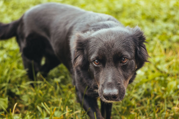 Cute dog on a street Cute Pets Funny Animal Animal Themes Black Color Canine Cute Cute Dog  Day Dog Domestic Domestic Animals Field Grass Land Looking At Camera Mammal Nature No People One Animal Pets Plant Portrait Vertebrate