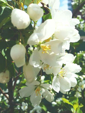 Plant Nature Flower Tree Beauty In Nature Beauty In Nature Freshness Love Reshasuper Beauty Botany Sammer Freedom