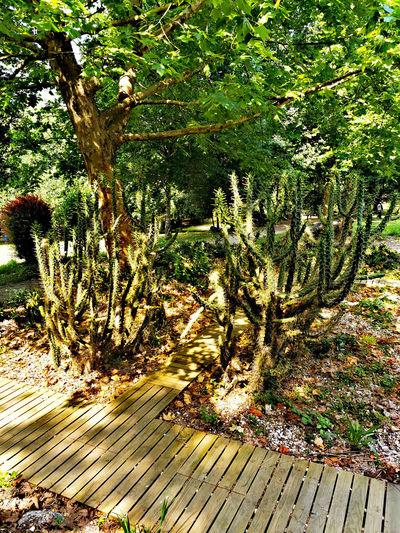 Cactus growing on field