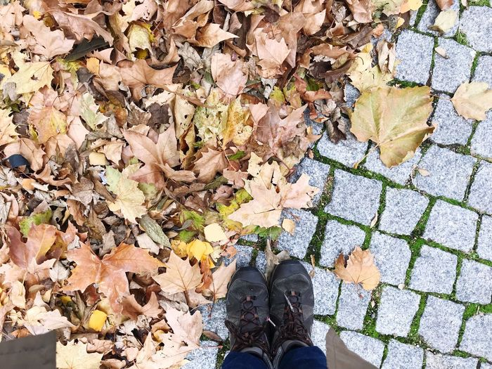 Low Section Of Person By Autumn Leaves On Footpath