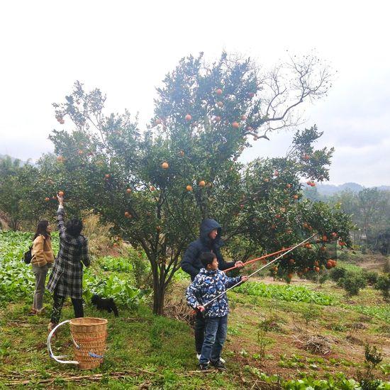 Tree Child Spraying Childhood Boys Full Length Standing Girls Females Males