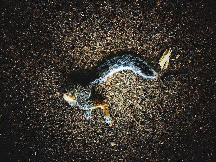 Dead Squirrels