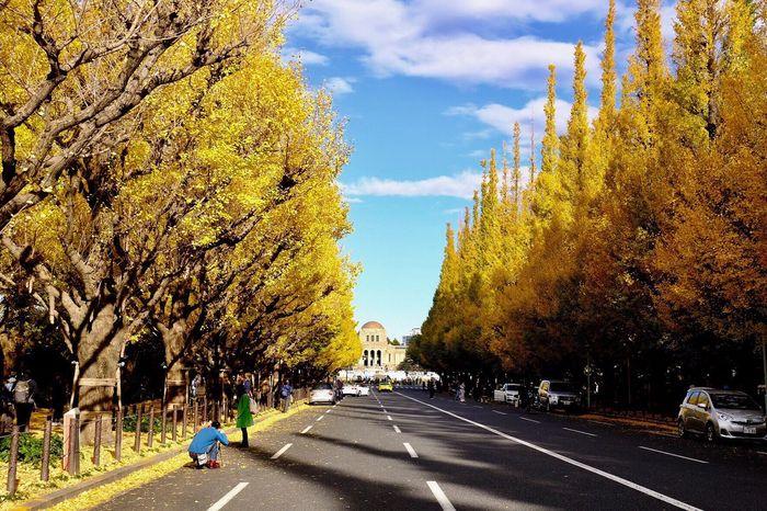神宮外苑の銀杏並木 Autumn Beauty In Nature First Eyeem Photo