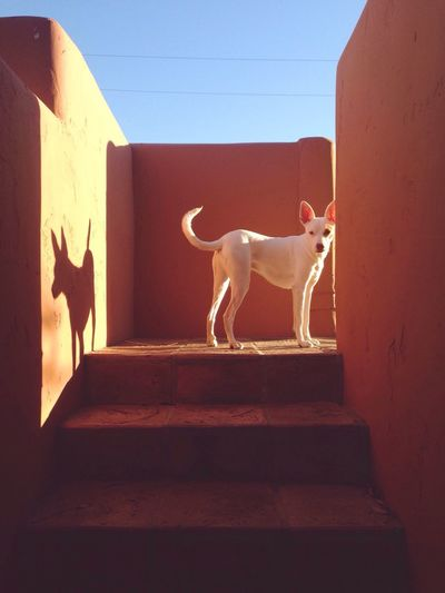 Desert vibes with Spud The Dog