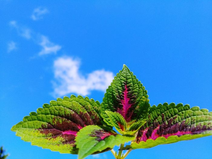 Close-up of green plant against blue sky