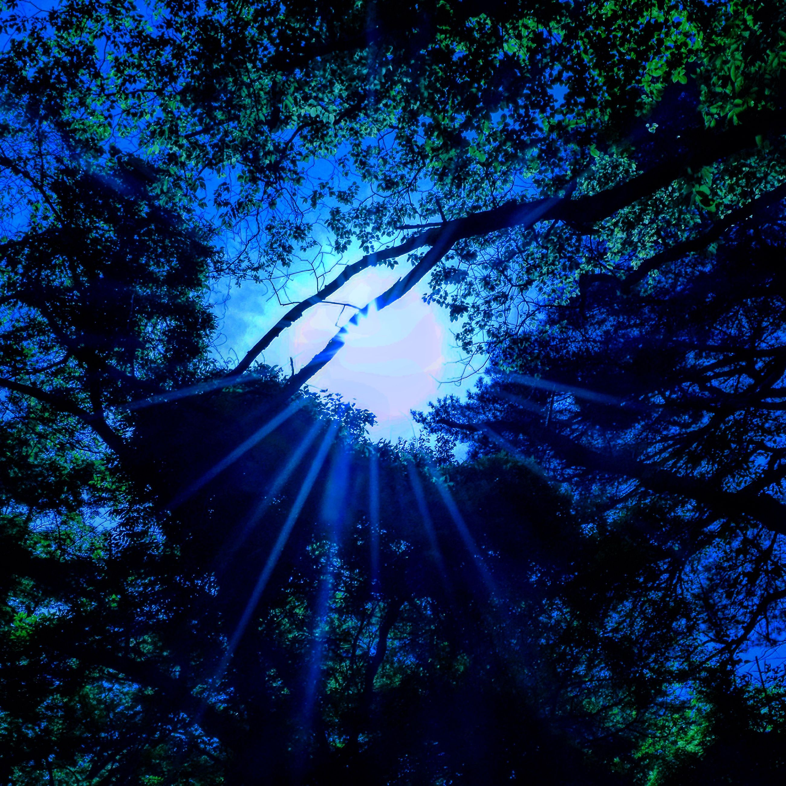 low angle view, tree, growth, branch, nature, sunlight, sky, outdoors, tranquility, beauty in nature, no people, day, sun, sunbeam, tall - high, clear sky, lens flare, forest, silhouette, blue